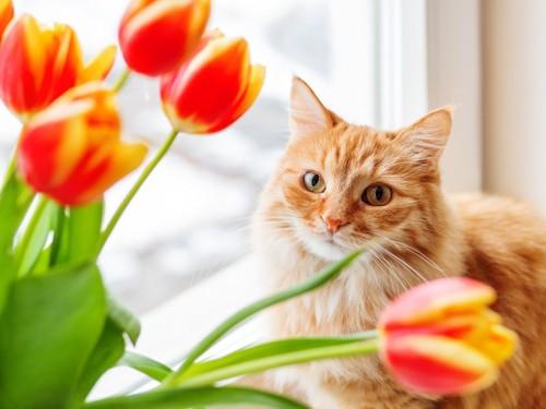 窓辺でまるくなる猫と庭の花