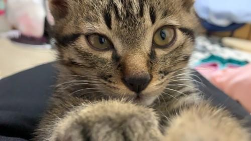 前足をこちらにのばした猫