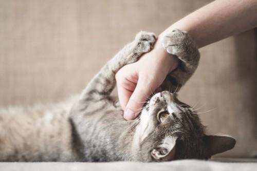仰向けになって人の手をつかむ猫