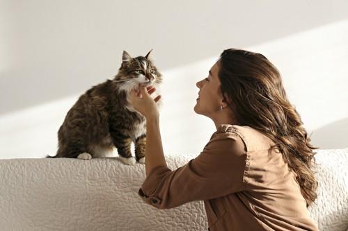 猫の目を見て話しかける女性