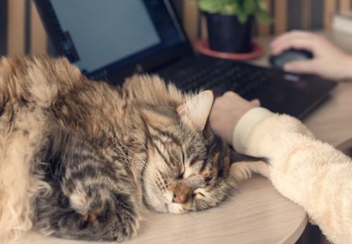 パソコンデスクで眠る猫