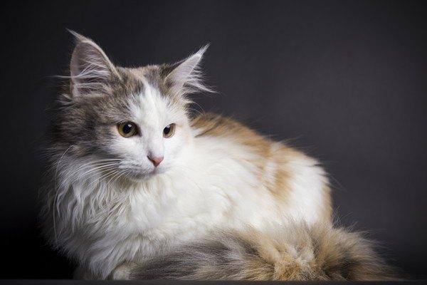 暗い場所にいる白茶色の猫