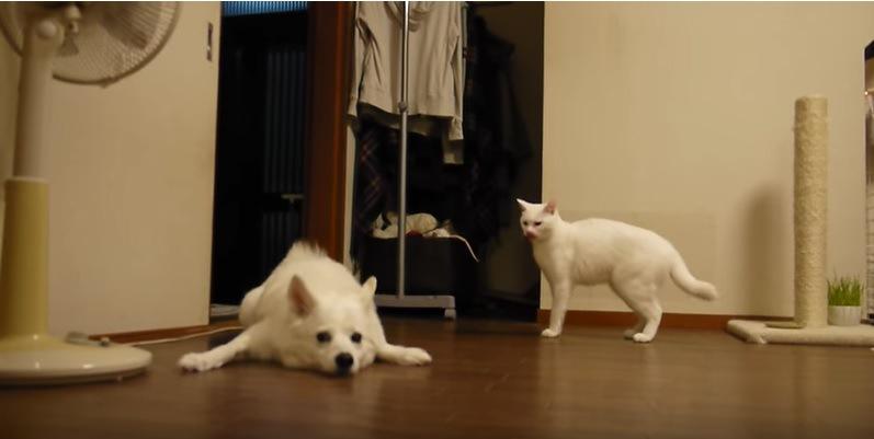 ペタンとなる犬とそれを見る猫