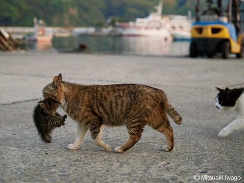 ネコと子猫