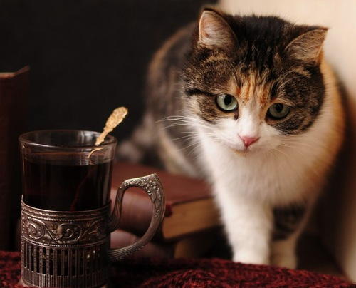 ホットカップのお湯と猫