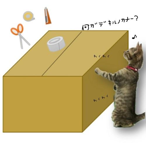 ダンボールの横に立つ猫