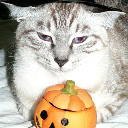 不機嫌顔の猫