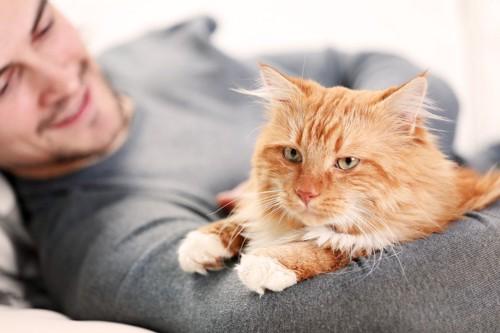 男性の腕に乗る猫