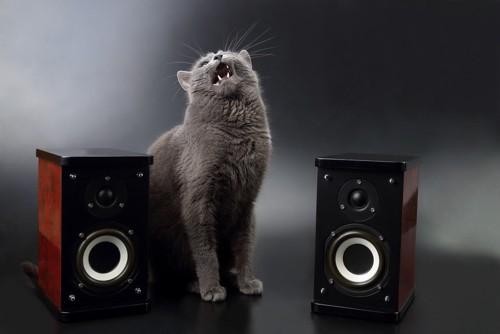 スピーカーに怒る猫