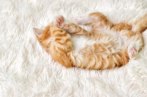 顔を隠して仰向けに眠る猫