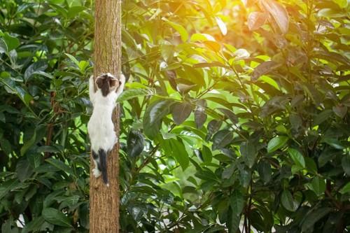 木にしがみつく猫