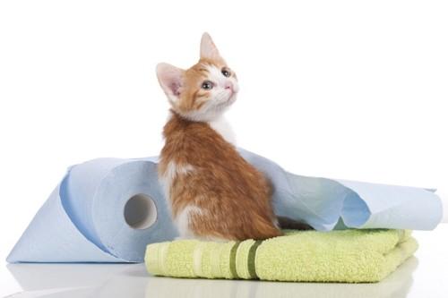 トイレットペーパーとタオルと振り向く茶色の子猫