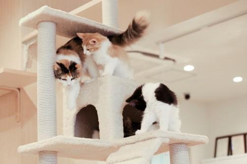 キャットタワーで遊ぶたくさんの猫