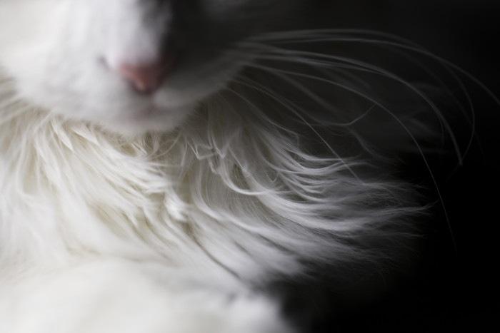 猫の口元の写真