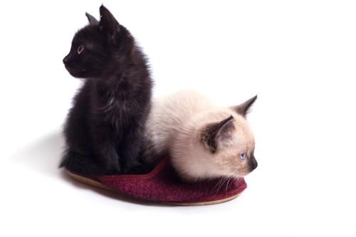 スリッパの上に乗る2匹の子猫