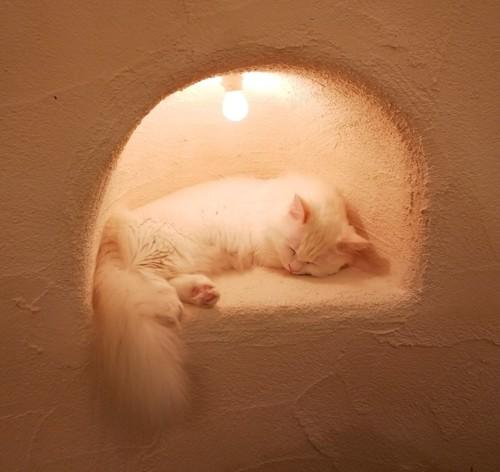 穴の中で寝る白猫