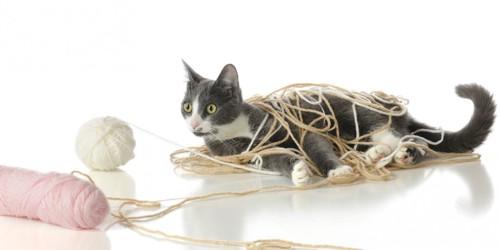 毛糸に絡まっている猫