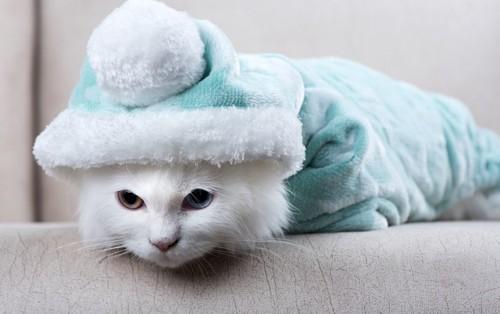 防寒服を着る猫