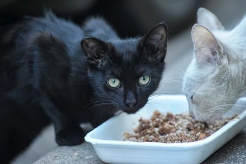 こちらを見る黒猫