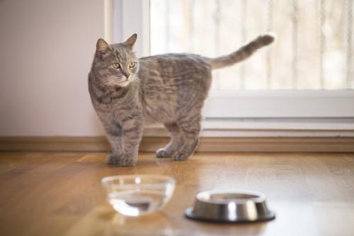 遠巻きに水入れを見る猫
