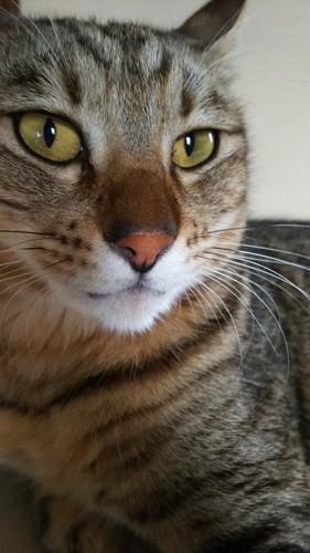猫のひげ袋のドアップ