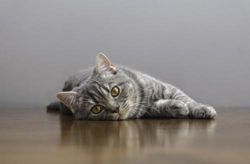 床に寝転んでこちらを見る猫