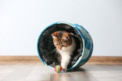 ボールで遊ぶ猫