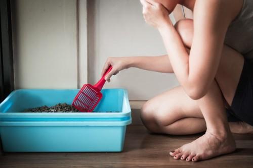 鼻をつまみながら猫のトイレ掃除をしている女性