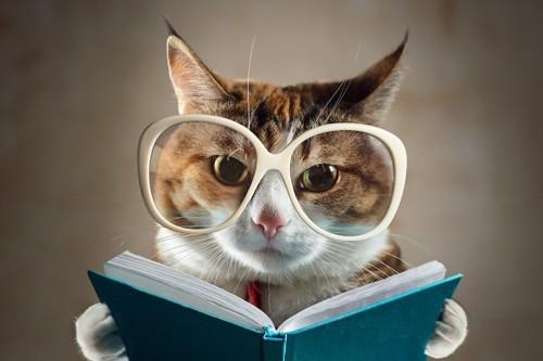 眼鏡をして本を読んでいる猫