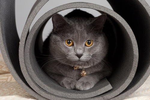 ヨガマットの中の猫