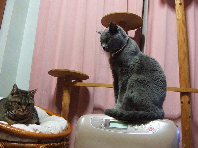 カーテンの前で2匹のネコがうつっている画像