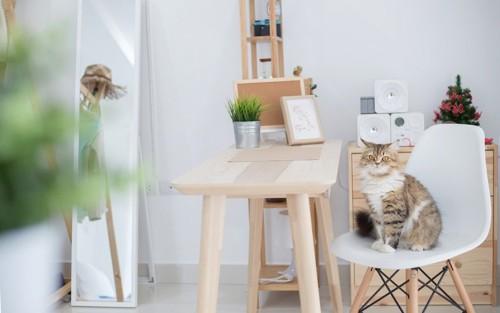 椅子に座ってこちらを見ている猫