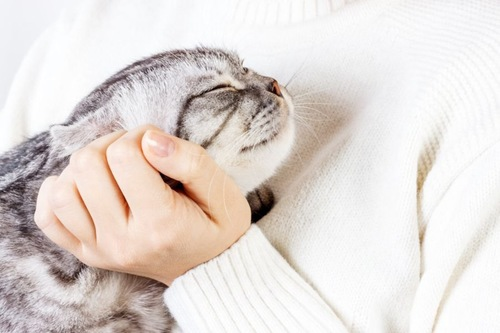 顔をなでられて目を閉じる猫