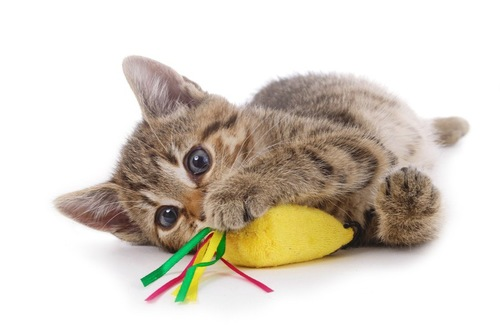 ぬいぐるみで遊ぶ猫