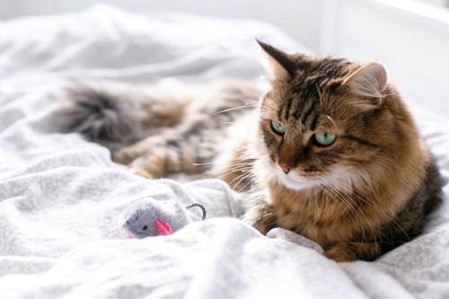 ベッドの上の猫
