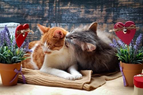 毛づくろいをする二匹の猫