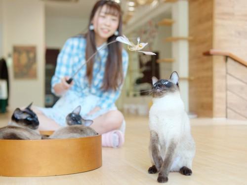 人と遊ぶ子猫