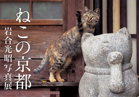 ねこの京都1