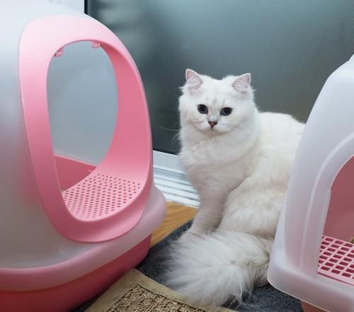 トイレとトイレの間にいる白猫