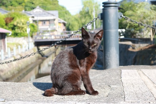茶色に毛が焼けてる黒猫