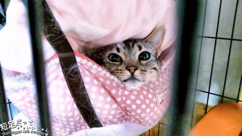 ケージの中のハンモックに乗る猫
