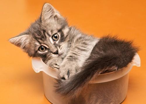鍋に入る猫
