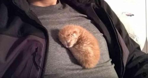 人のお腹の上で寝る子猫