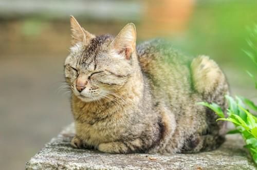塀の上で目を閉じる猫