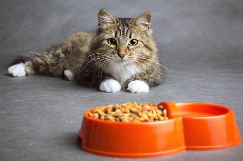 ご飯と水の前でくつろぐ猫