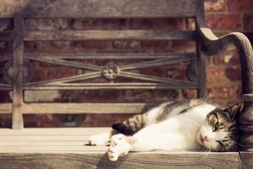 ベンチで横になる猫