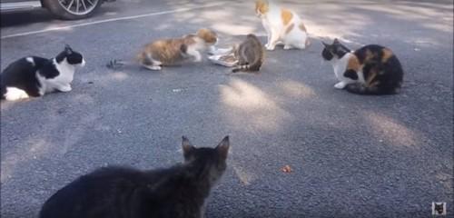 茶白猫の猫パンチ