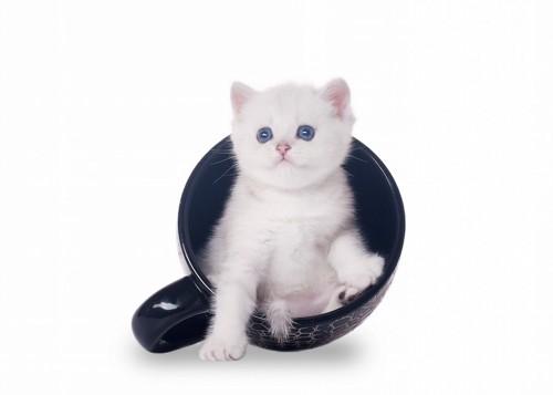 黒いカップに入る子猫