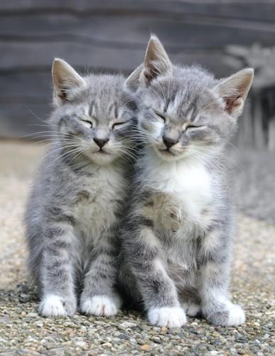 寄り添って座る2匹の子猫