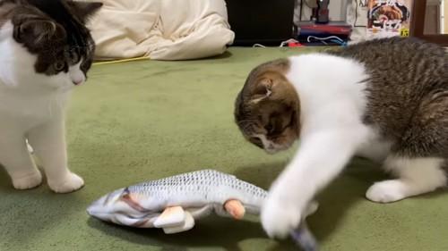 おもちゃに猫パンチする猫